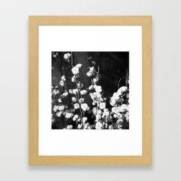 Cottton Framed Art Print
