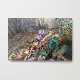 november flowers Metal Print
