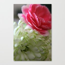 Pink Carnation and White Chrysanthemum Canvas Print