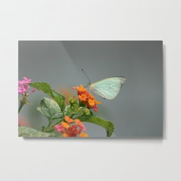 Cabbage Butterfly on a Flower Metal Print