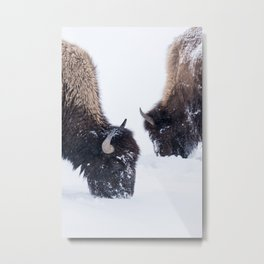 Two Bison in Winter Metal Print
