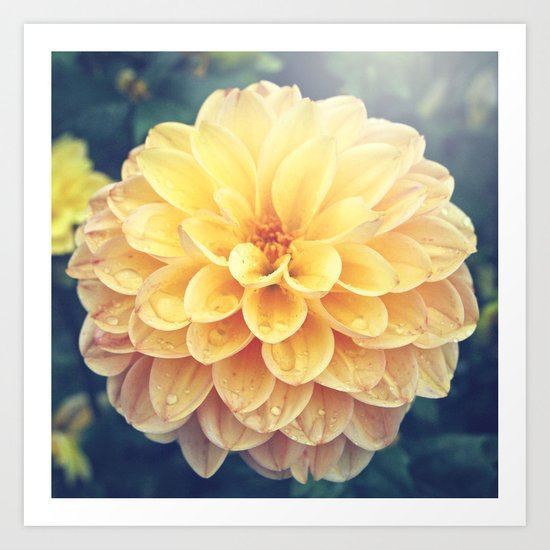 Pretty Yellow Dahlia Art Print