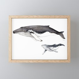 North Atlantic Humpback whale with calf Framed Mini Art Print