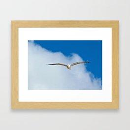 Solitary Seagull Bird Flying Sky Clouds Framed Art Print