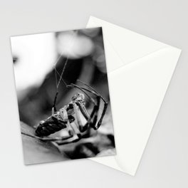 Spider and Leaf in Black and White Stationery Cards