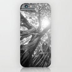 Banyan Tree Slim Case iPhone 6s