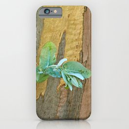 Eucalyptus Tree New Sprout Bark and Wood Natural Texture iPhone Case
