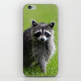 Curious Raccoon iPhone Skin