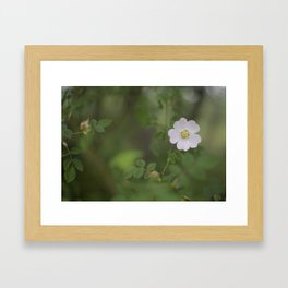pink flower Framed Art Print