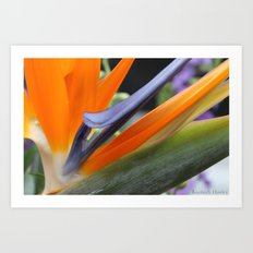 Birds of Paradise Art Print