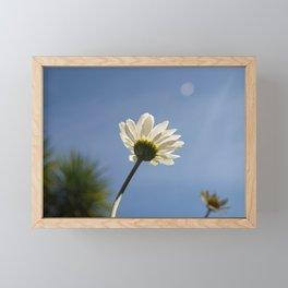 WHITE DAISY FLOWER LOOKING UP AT THE SUN Framed Mini Art Print