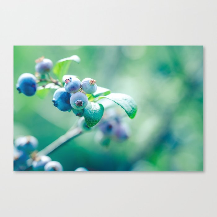 Fleeting Blue Summer Canvas Print