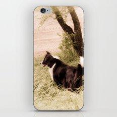 Peppy iPhone & iPod Skin