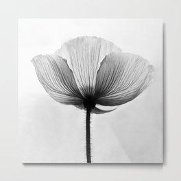 XRAY FLOWER [transparent black white poppy petals] Metal Print