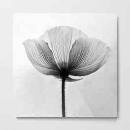 XRAY FLOWER [transparent black white poppy petals] Metal Print