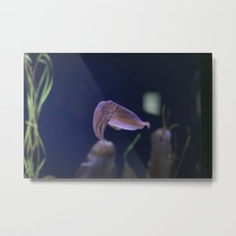 In the Tank: Nope Metal Print