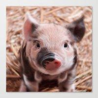 piglet Canvas Prints featuring Sweet piglet by MehrFarbeimLeben