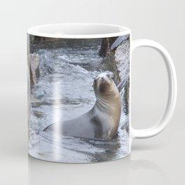 California Sea Lions in Monterey Bay Coffee Mug
