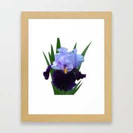 Iris 'Habit' Framed Art Print