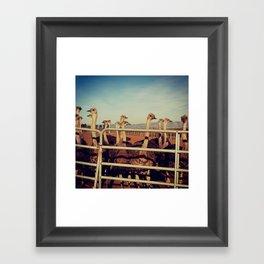Ostrich Farm Framed Art Print