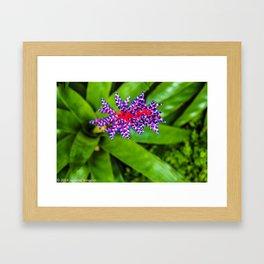 Orchid Flower Framed Art Print