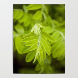 Green Life by Althéa Photo Poster