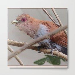 piaya cayana Bird Metal Print