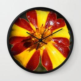 "My Flower: Marigold ""Mr. Majestic"" Wall Clock"