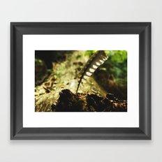 Pheasant feather Framed Art Print