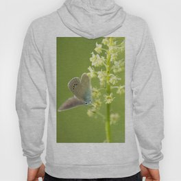 Butterfly on Spring flowers Hoody