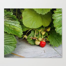 Wild Strawberry Photography Print Canvas Print