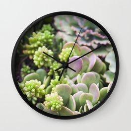 Blushing Succulents Wall Clock