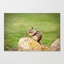 Squirrel Eating Canvas Print