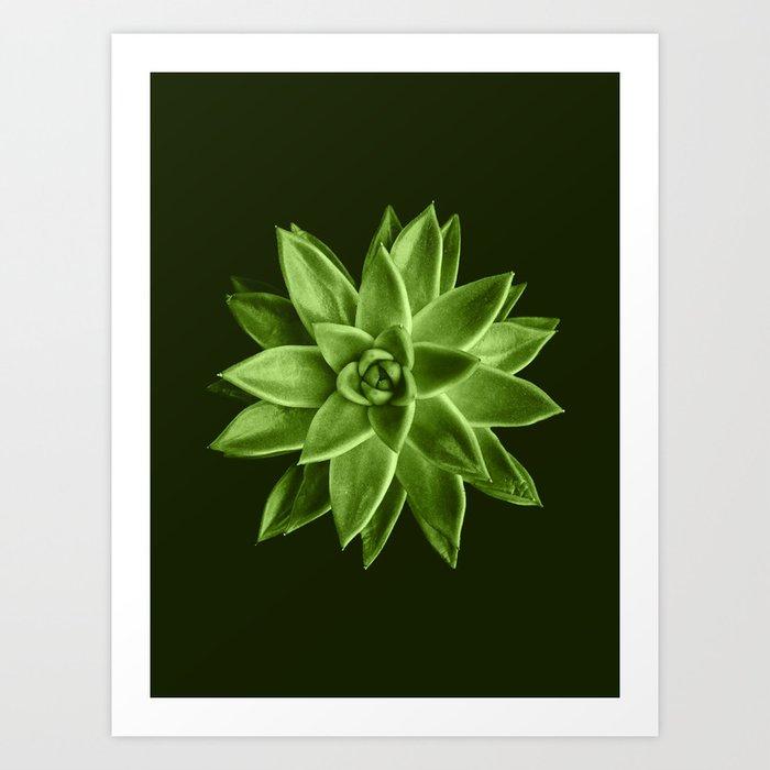 Greenery succulent Echeveria agavoides flower Art Print