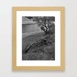 Growth and Decay Framed Art Print