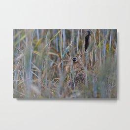 Brown Hare Metal Print