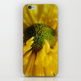 Yellow Flower With Curling Petals iPhone Skin