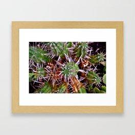 Cactus Micro Framed Art Print