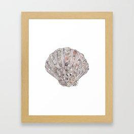 Seashell #4 Framed Art Print