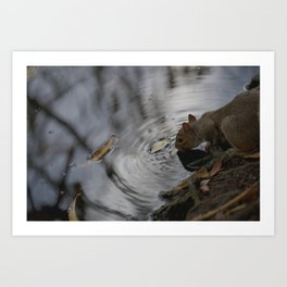 Sipping Squirrel Art Print