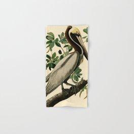 Brown Pelican (Pelecanus occidentalis) Scientific Illustration Hand & Bath Towel