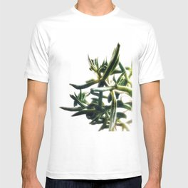 Jade - money plant - succulent in bright light T-shirt