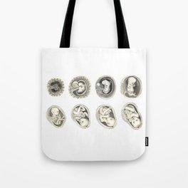 Foetal development Tote Bag