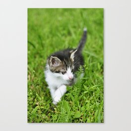 Kitten in the grass Canvas Print