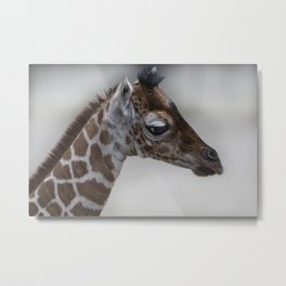 Baby Giraffe with Big Eyes Metal Print