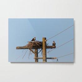 Osprey Nest Metal Print