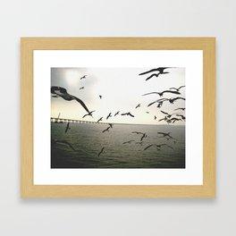 seagulls Framed Art Print