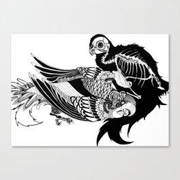 Paco Canvas Print