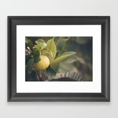Limón Framed Art Print