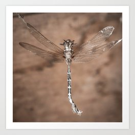 Dragonfly Strung Up Art Print